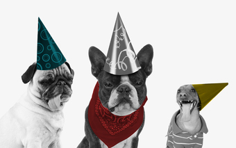 GA DC's Yappy Hour: Celebrating Adopt a Shelter Month
