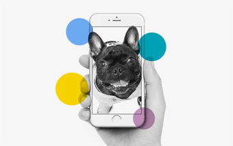 Trendsetters: How to Digitise Man's Best Friend