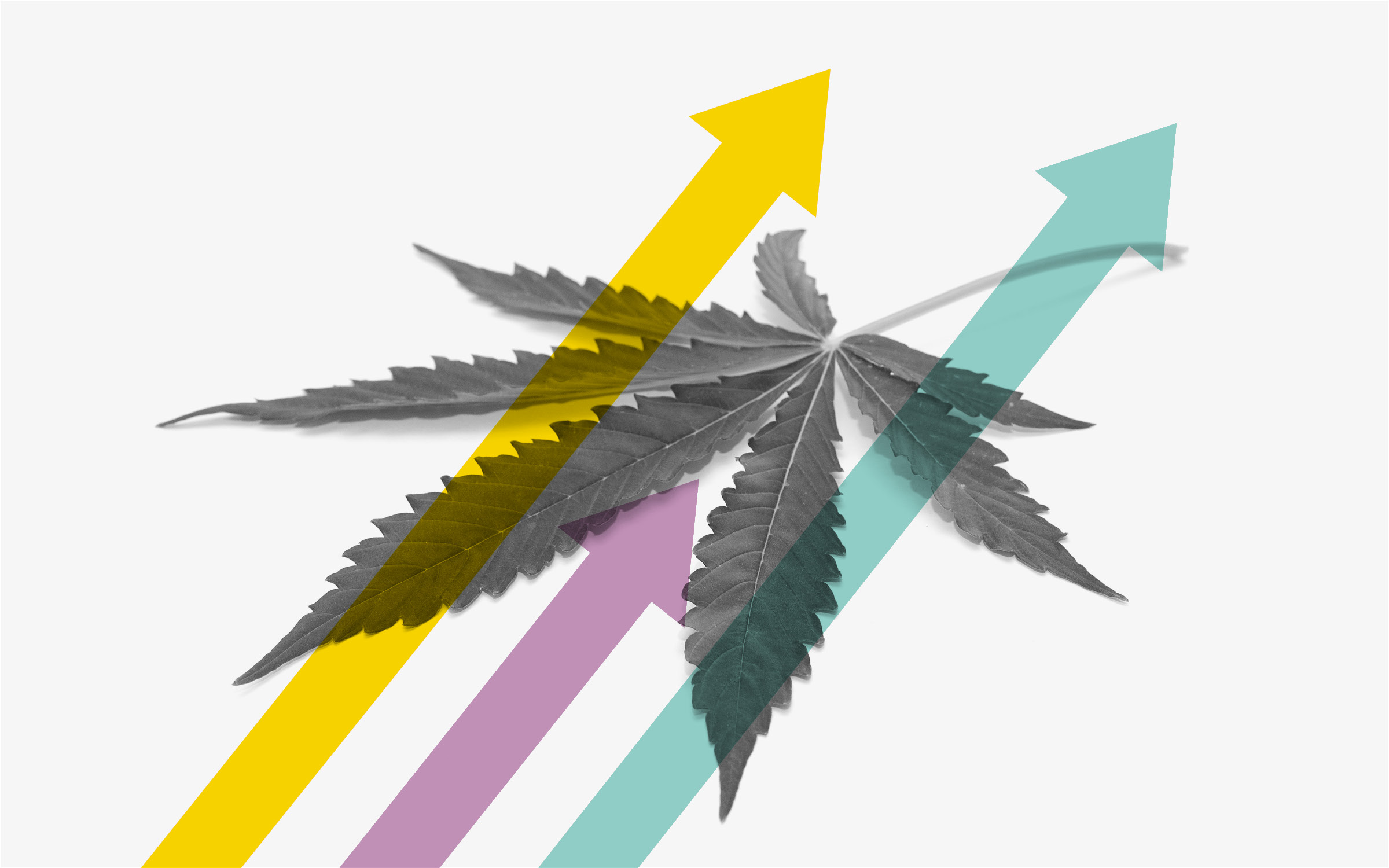 Blazing New Frontiers: Roundtable with Cannabis Founders