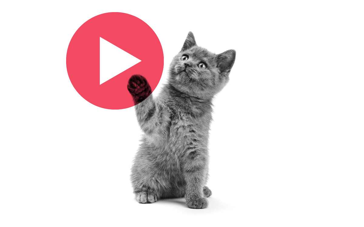 Coffee + Kittens: Viral Politics with GA + BuzzFeed