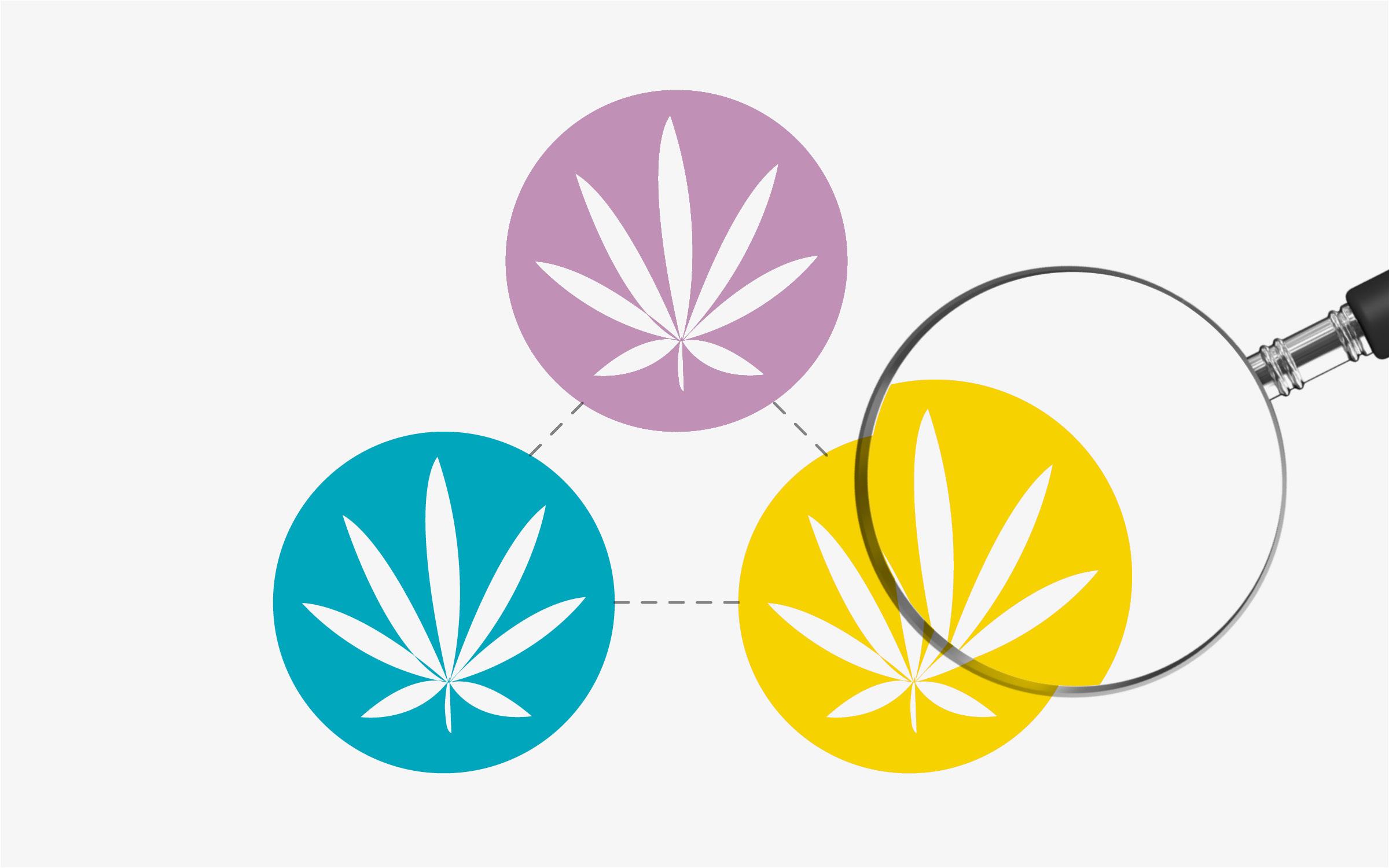 Conscious Cannabis: Business for Social Good