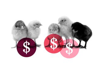 Crowd Funding: The New Alternative