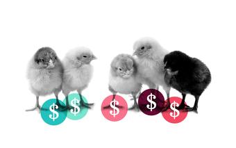 Raising Capital & Pitching to Investors