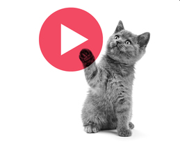Wistia Presents: Video Marketing Best Practices + Festival Pump Up Party